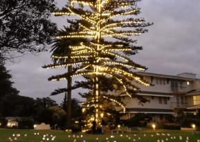 Tree of Lights – Lighting ceremony 2020